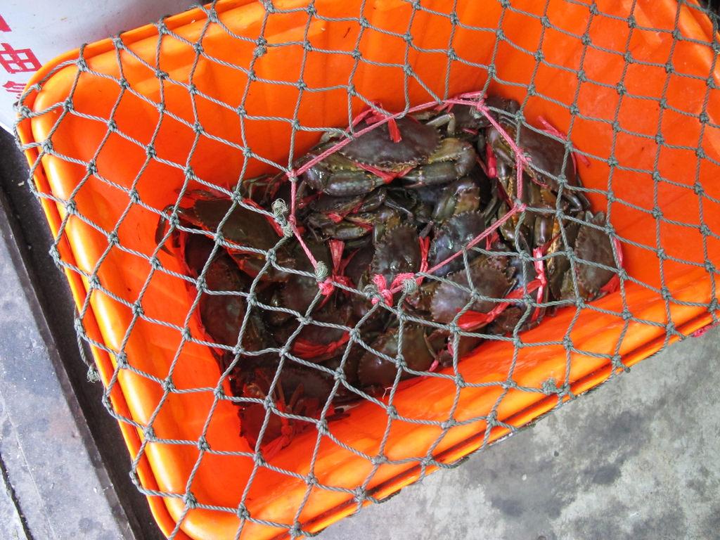 滿滿的螃蟹